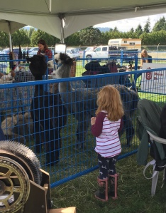This little angel recognized Koko from her summer camp farm visit. She completely ignored all of us and just talked to the alpacas.